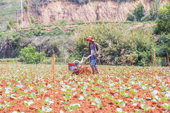 Farmer working in vegetable farm Stock Photos