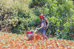 Farmer working in vegetable farm Royalty Free Stock Image