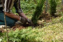 Free Farmer Works By Planting Shrubs In The Garden Soil Stock Images - 200201304