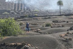 Farmer works in surrealistic lava field,Spain Royalty Free Stock Photos