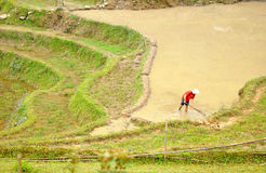 Farmer works on the rice fields Royalty Free Stock Images