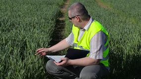 Farmer writing at the green cereal field stock video footage