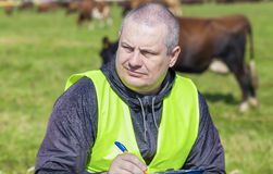 Farmer writing near the cows. At pasture royalty free stock photography