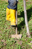 Farmer yellow boots working spade field closeup. Farmer with yellow boots working with spade in the field closeup Stock Images