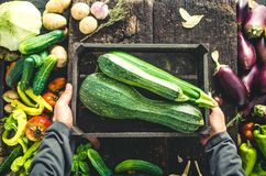 Farmer with zucchini Stock Photo