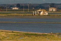 Farmerhouse no campo do arroz fotos de stock royalty free