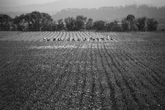 Farmers Royalty Free Stock Photo