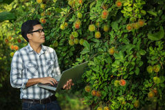 Farmers attractive young man with a laptop stand in the fruit garden. Royalty Free Stock Images