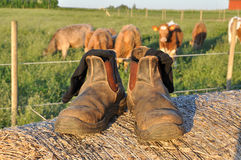Farmers boots Stock Photography