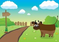 Farmers Bull Stock Photos