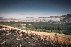 Farmers burned their crops after harvest. Burned after harvest, Thai farmers royalty free stock image