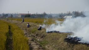 Farmers burning straw in the fields,china, stock video footage