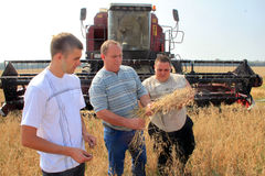 Farmers check the quality of the harvest Stock Image
