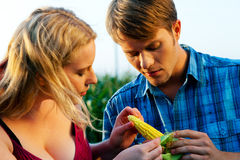 Farmers checking corn for harvest Royalty Free Stock Photo