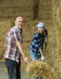 Farmers collecting hay with pitchforks Royalty Free Stock Photo