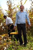 Farmers at corn harvest Royalty Free Stock Images