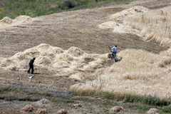Farmers cutting hay near the site of Noah's Ark near the city of Dogubayazit in the far east of Turkey. Farmers cutting hay near the site of Noah&#x27 Stock Images