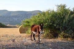 Farmers donkey Royalty Free Stock Photos