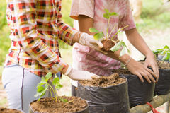 Farmers are expanding Veggies and fruits plant.  Royalty Free Stock Photo