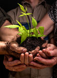Farmers family hands holding a fresh young plant. Dirty hands of a farmer's family, holding a young plant,concept of environmental conservation Stock Images