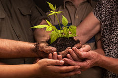 Farmers family hands holding a fresh young plant. Dirty hands of a farmer's family, holding a young plant,concept of environmental conservation Royalty Free Stock Photography