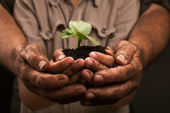 Farmers family hands holding a fresh young plant. Dirty hands of a farmer's family, holding a young plant,concept of environmental conservation Royalty Free Stock Photo