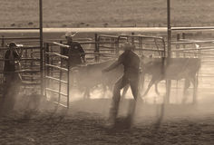 Farmers with farm animals. BRICE CANYON CITY, UTAH - JUNE 25: Cowboys with their animals at a rodeo show at Ruby's Inn Bryce Canyon Country Rodeo on June 25 Stock Image
