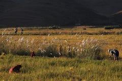 farmers farming royalty free stock photo