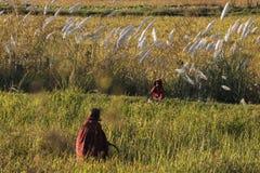 farmers farming stock photo