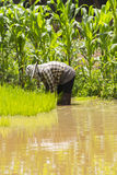 Farmers - the farming of Thailand started already in the field Royalty Free Stock Photo