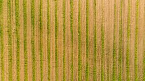 A harvested wheat field stock images