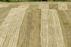 Farmer's Field After Hay Cutting Stock Photo