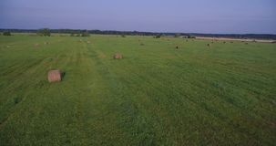 Field of large hay bales, low flying aerial stock video
