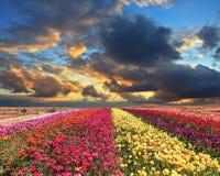 Farmers flowers Stock Photos