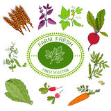 Farmers food design, logo and vegetables Royalty Free Stock Photo
