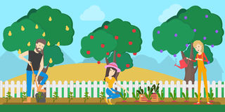 Farmers in the garden. People collect harvest as fruits from the trees Royalty Free Stock Images