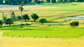 Farmers go to work by bicycle on the field Royalty Free Stock Images