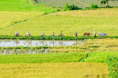 Farmers go to work by bicycle, the field in the early morning Royalty Free Stock Photography
