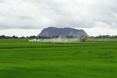 Farmers in green paddy fields. Scenic view of green paddy fields with farmers burning crops in background Royalty Free Stock Photography