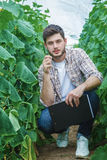 Farmers are growing and harvesting vegetables. Young farmers are grown and harvested organic vegetables Royalty Free Stock Image