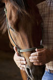 Farmers hands holding horses head Royalty Free Stock Photography