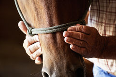 Farmers hands on horse Stock Photography