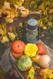 The farmers harvest different vegetables in late summer in the organic garden. Healthy, sustainable food. Autumn. Stock Images