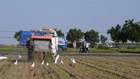 Harvest at harvest stock video