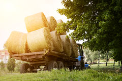 Farmers harvesting hay Stock Image