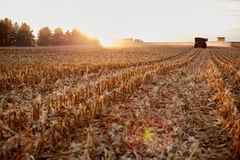 Farmers harvesting maize during golden hour. With the rows of cut stubble backlit by the setting sun with a combine harvester and semi in the distance Stock Photography