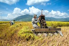 Farmers harvesting rice. BINH THUAN- VIETNAM: The farmers harvesting rice by machine in Binh Thuan province, Vietnam Royalty Free Stock Images