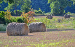 Farmers Hay Field Harvest. Rolled hay bales in farmers field Stock Photos