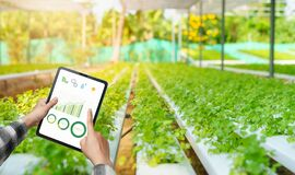 Farmers healthy hydroponic vegetables. She uses tablet technology to control plant growth factors. temperature and humidity.