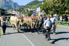 Farmers with a herd of cows on the annual transhumance at Engelb Royalty Free Stock Image